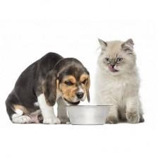 Веганские корма для животных