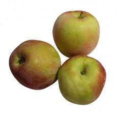 Яблоки ранние